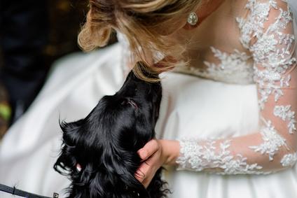 Auf Den Hund Gekommen Plant Eure Hochzeit Mit Euerm Hund Unser