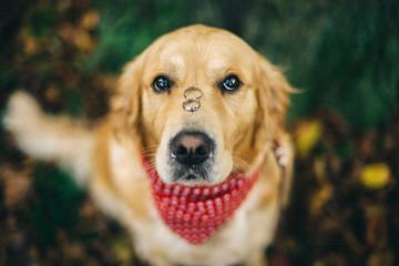 Hund Hochzeit Unser Augenblick